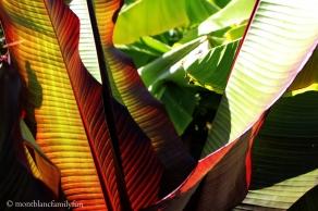 Le Jardin des Cimes © montblancfamilyfun
