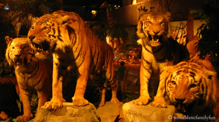 Natural History Museum, Geneva © montblancfamilyfun.com