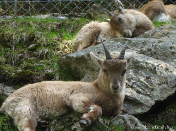 Le Parc de Merlet in Les Houches © montblancfamilyfun.com