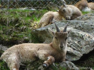 Parc Animalier de Merlet (Les Houches) © montblancfamilyfun.com