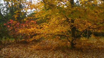 Geneva botanical gardens (CBJG) - autumn © montblancfamilyfun.com