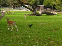 Botanical Gardens Geneva (CJBG) - animal park © montblancfamilyfun.com