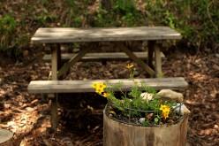 Parc de Merlet - picnic spot at entrance © montblancfamilyfun.com