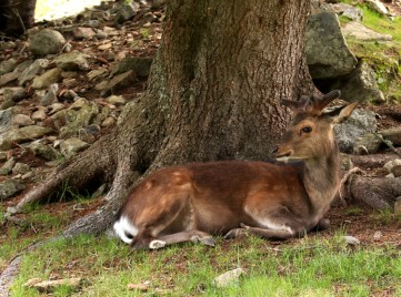 Le Parc Animalier de Merlet - a deer in the shade © montblancfamilyfun.com