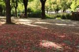 Les châtaignes flower leaves Sallanches © montblancfamilyfun.com