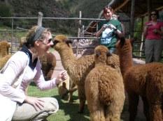 Getting to know some alpacas © montblancfamilyfun.com