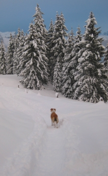 A winter wonderland in Combloux with Lucca © montblancfamilyfun.com