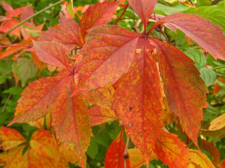 Lacs des Ilettes - autumn leaves © montblancfamilyfun.com