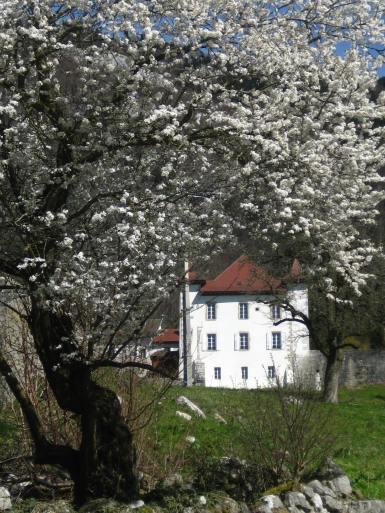 Chartreuse de Pomier, springtime blossom © montblancfailyfun.com