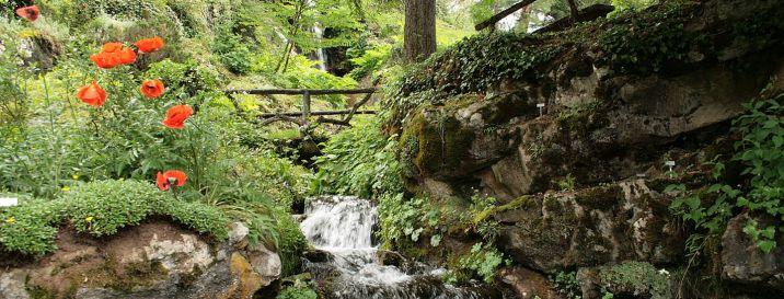 Jaÿsinia Jardin Alpin inSamoën © www.mnhn.fr