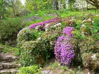 Jaÿsinia Jardin Alpin inSamoën © Samoën Tourisme