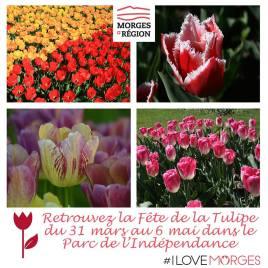 «Fête de la Tulipe» in Morges © morges.com