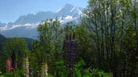 Lupins La Charousse, Les Houches © montblancfamilyfun