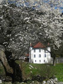 Springtime blossoms near the Maison du Salève © montblancfamilyfun.com