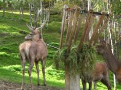 Parc Animalier d'Introd © montblancfamilyfun.com