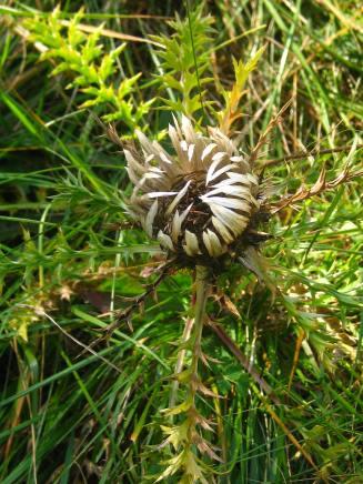 Botanical walk on sommet du Salève © montblancfamilyfun.com