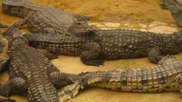 La Ferme aux Crocodiles, Pierrelatte © montblancfamilyfun.com