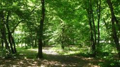 La Braconne woods, Sallanches © montblancfamilyfun.com