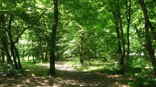 La Braconne woods (Sallanches) © montblancfamilyfun.com