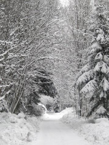 Bois du Bouchet - winter stroll © montblancfamilyfun.com
