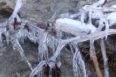 Burzier to Refuge du Tornieux - frozen branches on stream ©