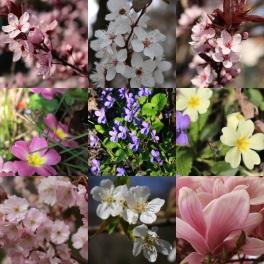 Springtime blossoms Sallanches © montblancfamilyfun.com