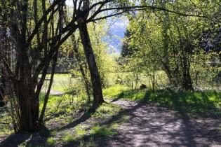 Bois de la Braconne, Sallanches © montblancfamilyfun.com