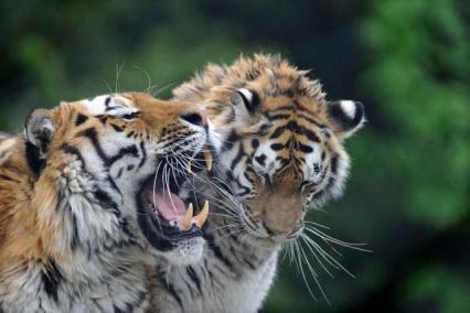 © Zoo de Servion