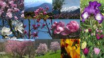 Springtime © montblancfamilyfun.com