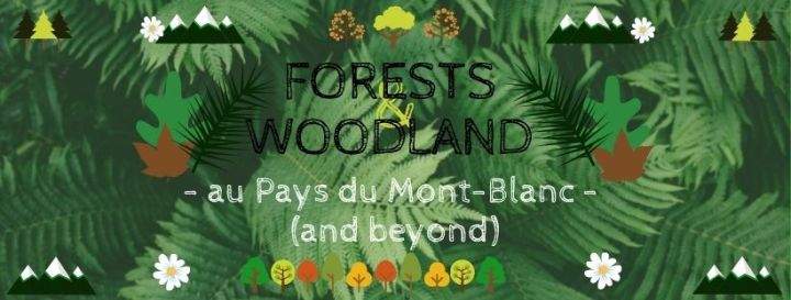 forests & woods (1)