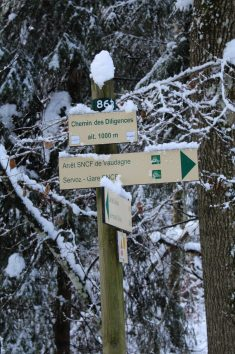 Lac des Chavants woods in wintertime (Chemin des Diligences) © montblancfamilyfun.com