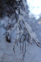 Lac des Chavants woods in wintertime © montblancfamilyfun.com