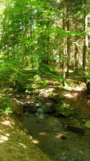 Lac des Chavants woods © montblancfamilyfun.com