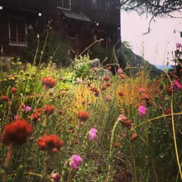 © Jardin Botanique Flore-Alpes