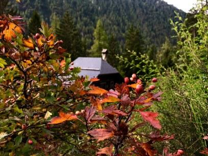 © Le Jardin Botanique Flore-Alpe (Champex-Lac)