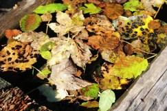 Le Sentier Découverte (Les Contamines-Montjoie) - autumn leaves © montblancfamilyfun.com