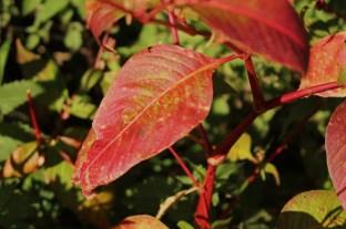 Le Sentier Découverte - autumn leaf (Les Contamines-Montjoie) montblancfamilyfun.com