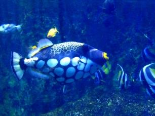 Aquarium de Lyon © montblancfamilyfun.com