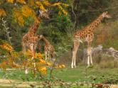 Parc de la Tête d'Or - Zoo de Lyon © montblancfamilyfun.com