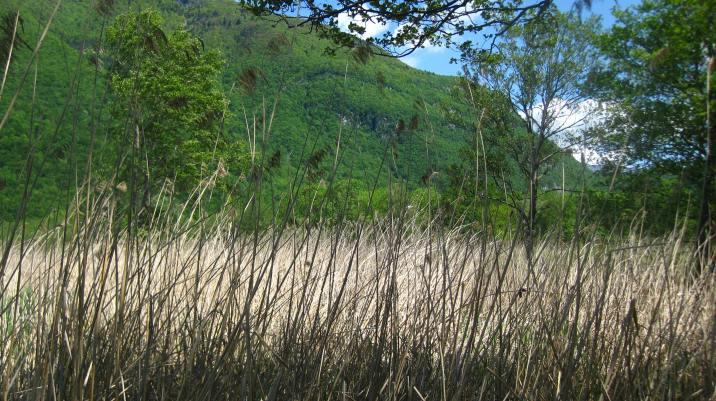 Les Roselières of La Réserve Naturelle du Bout-du-Lac (Doussard) © montblancfamilyfun.com