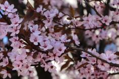 spring blossoms © montblancfamilyfun.com