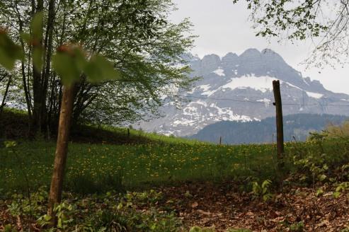 Bois de Fessy hike © montblancfamilyfun.com