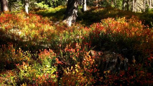 Sentier des Arpelières © montblancfamilyfun.com