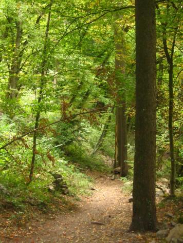 Luzier woods © montblancfamilyfun.com