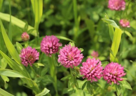 Arve River flora © montblancfamilyfun.com