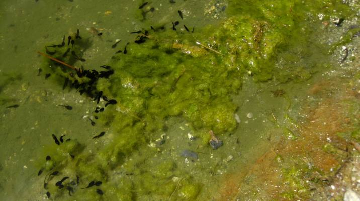Lac de Javen, tadpole pond © montblancfamilyfun.com