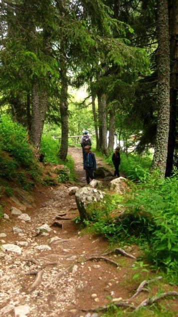 La Cascade de Bérard hike - in the forest © montblancfamilyfun.com