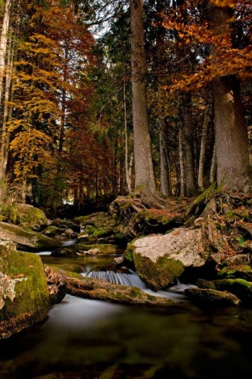 Cascade d'Ardent © Vallée d'Aulps Tourisme