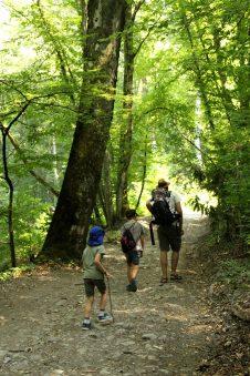 Le Chevalier Maudit - uphill through the forest © montblancfamilyfun.com