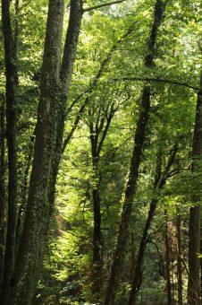 Le Chevalier Maudit - forest antics © montblancfamilyfun.com